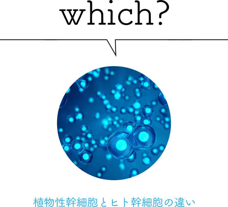which?植物性幹細胞とヒト幹細胞の違い