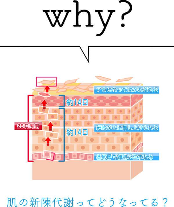 why?肌の新陳代謝ってどうなってるの?